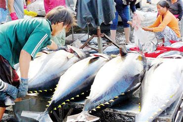 EC's Yellow Card For Vietnam Seafood Remains In Place