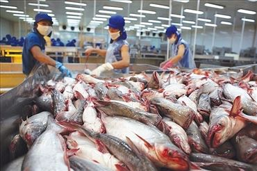 Vietnam Could Face Pangasius Oversupply